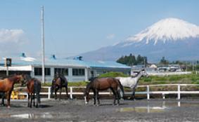 静岡動物飼育技術学院・ビューティードッグスクール沼津高等部は通信制高校鹿島学園高等学校のサポート校。